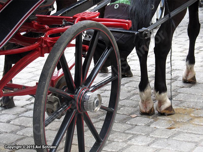 סוסים וכרכרות