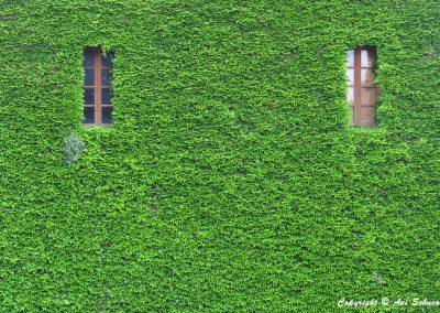 © Avi Schneor - Reflections c4