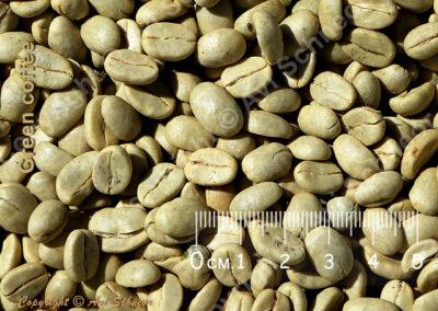 מראה קפה ירוק יבש View of dry green coffee